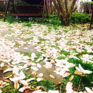 magnolia_tapparbladen